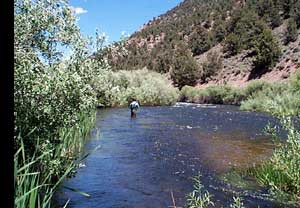 The trout fly where we fish page 2 for Walker river fishing